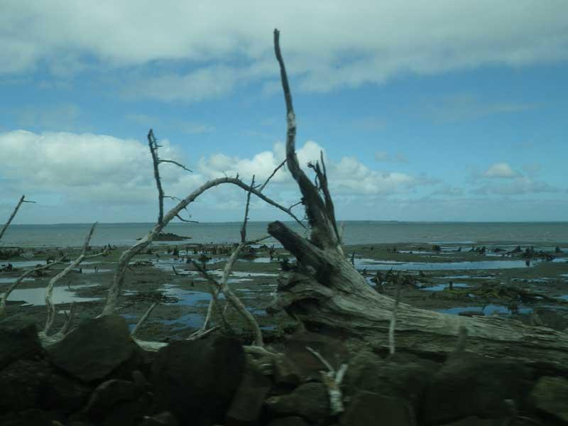 Абердин – маленький изолированный от цивилизации городок лесорубов на ветреном побережье Тихого океана.